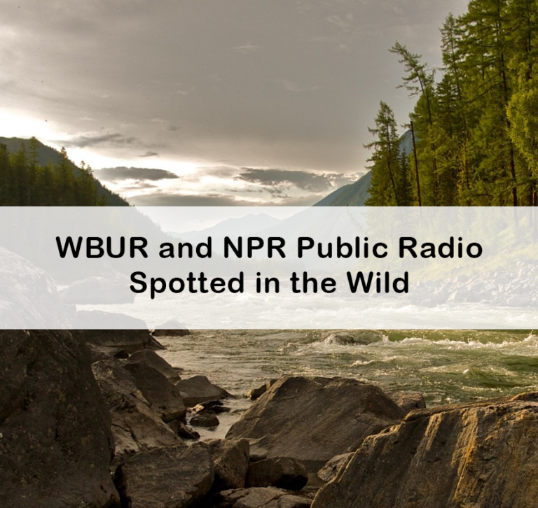 WBUR and NPR Public Radio Spotted in the Wild